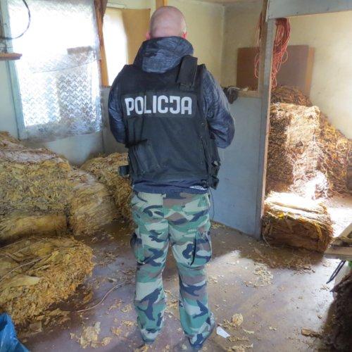 POLICJANCI ZABEZPIECZYLI PÓŁTOREJ TONY SUSZU TYTONIOWEGO